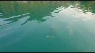 1,10m Hecht auf Seeforelle Bleder See